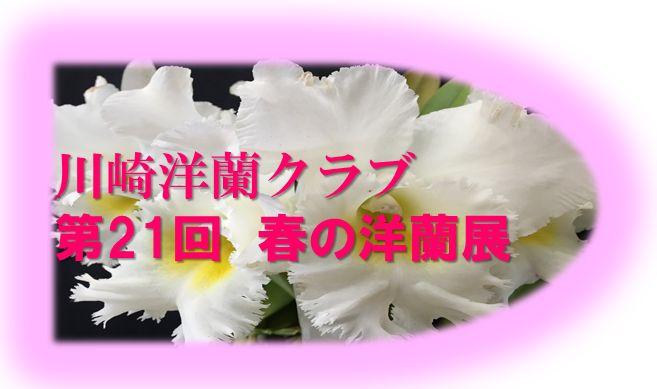 2016spring_logo2.jpg